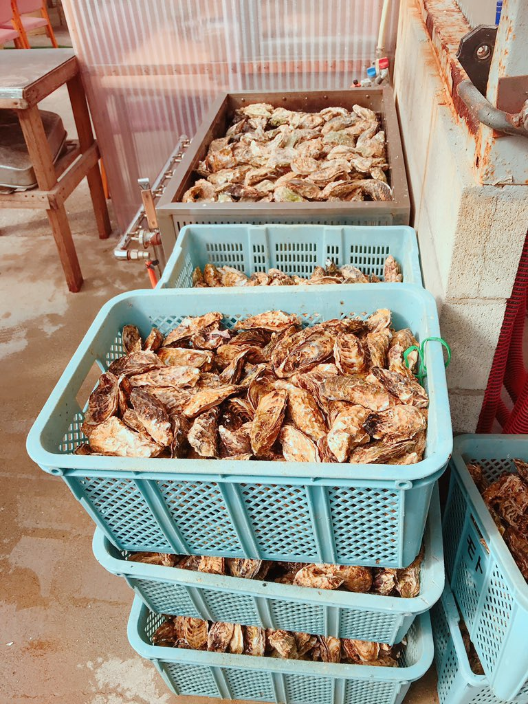 test ツイッターメディア - 牡蠣が好きで、、。鳥羽の食べ放題へ行く。量が半端では無いわ https://t.co/ofmOyrxQXE