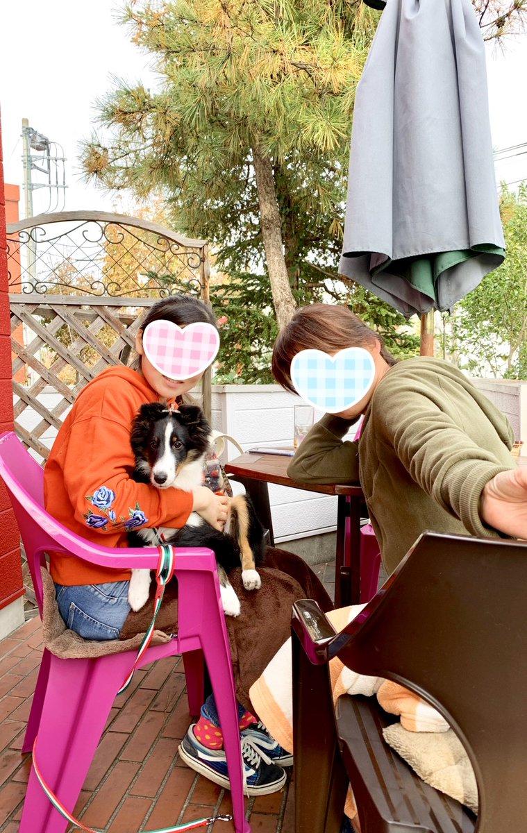 test ツイッターメディア - 雨予報の週末でしたが、お天気になりテラス席はワンちゃん連れのお客様で賑やかでした🐾 シェットランド・シープドッグ (Shetland Sheepdog) のローマちゃん4ヶ月です! おとなしくてお利口さん 可愛い〜💕 また来てね🐻❤️ https://t.co/M7Hl5loI72
