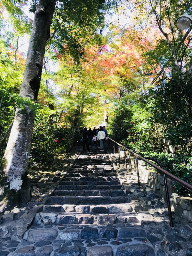 test ツイッターメディア - 鈴虫寺に来ましたん ここのお地蔵様は一つだけお願い事を叶えてくれるそうで🙌 景色がなんかもう異世界 ドラクエに出てくるなんか神秘的な森みたい🍁 https://t.co/1HLu1hBR33