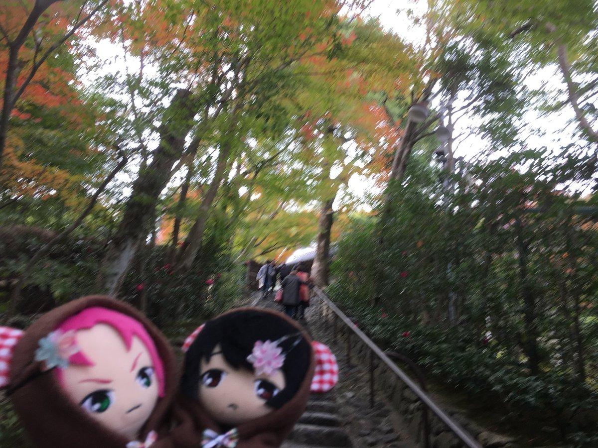 test ツイッターメディア - 今日は太秦映画村から嵐山方面に行った(♡´艸`) 教えて頂いた鈴虫寺にも行ってきた! 今までにない感じのお寺でへぇー!凄い!ってなった(❁´ω`❁) 写真は鈴虫寺とキモノフォレストのとうらぶコラボ! https://t.co/iDfU5suXO4