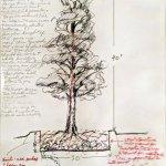Rockne Krebs Artist On Twitter Norfolk Island Pine Possible Indoor Tree Rockne Krebs 1973 Study For Possible Indoor Tree For Krebs Public Art Installation In Omni International Atlanta Ga In The 1970 S