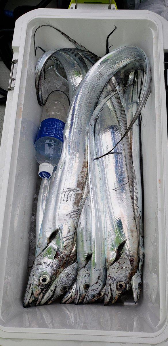 test ツイッターメディア - 今年最後の太刀魚釣り! 鯛は俺が釣ったもんじゃないです(笑) #豊後水道 #太刀魚ジギング https://t.co/WFifhR369k