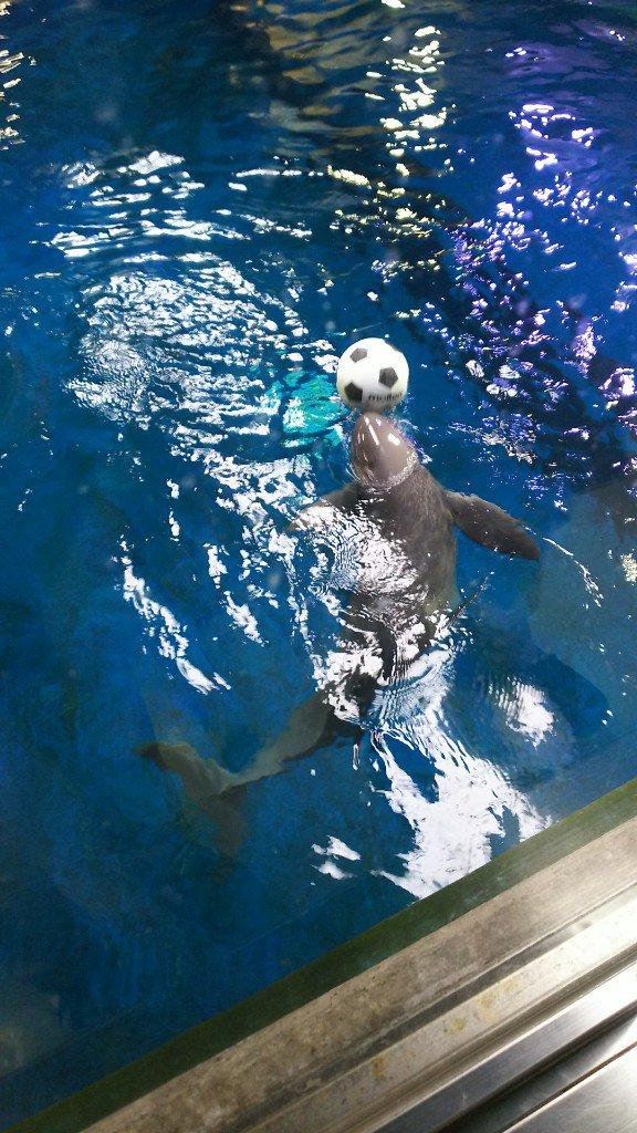test ツイッターメディア - ボールで遊ぶスナメリさん https://t.co/JgaZV5S9jU