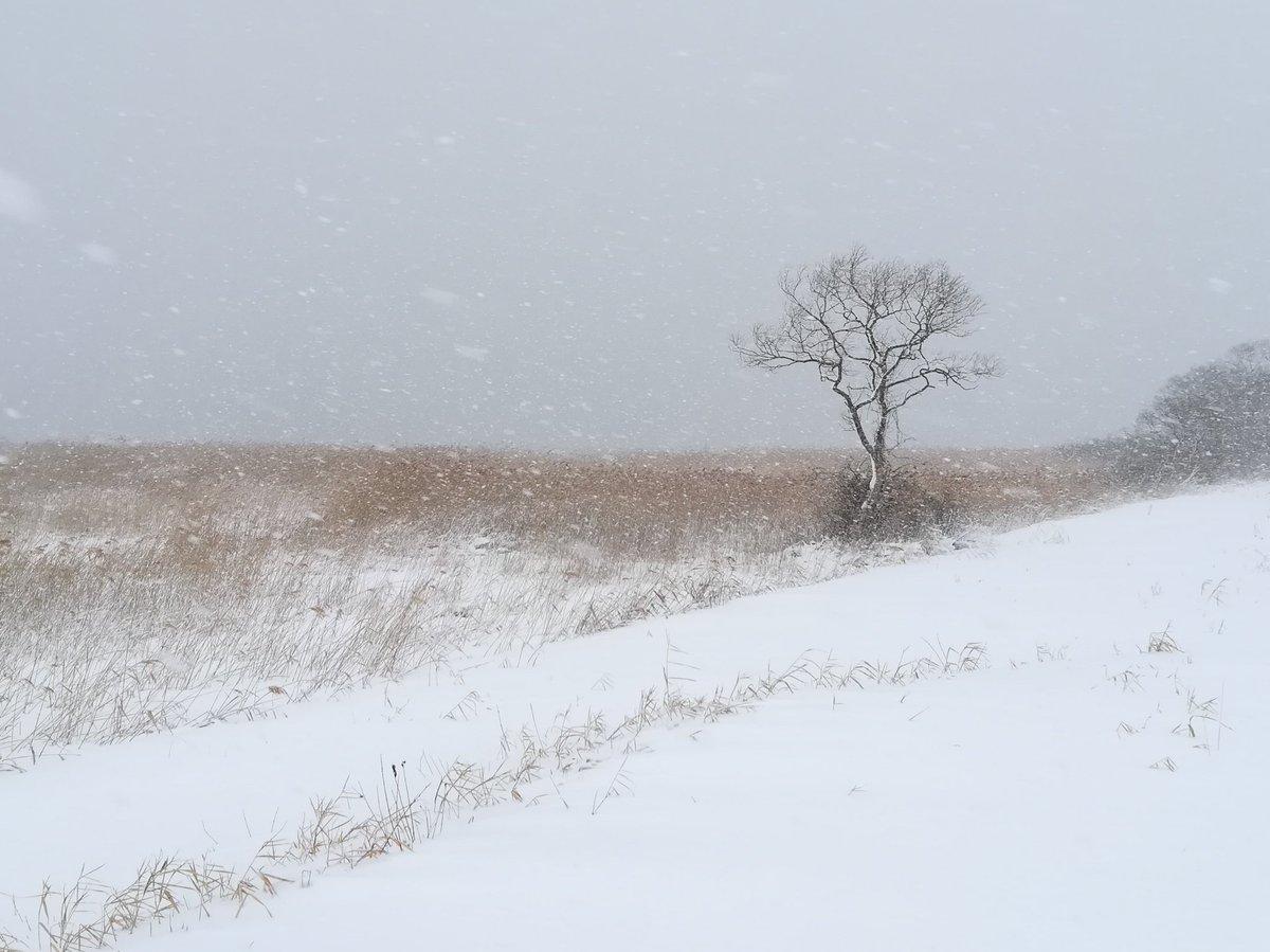 test ツイッターメディア - 今日仕事は休み。−5℃でこの天気。ワシがいない。ってか、いても見えない💦@小川原湖 https://t.co/4wiAAFwIEA