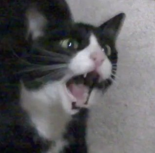 Kiana On Twitter This Cat Here This Crying Cat Meme This Is