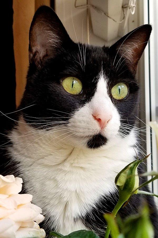 Grumpy Cat Math 2 Grumpy Cat Know Your Meme