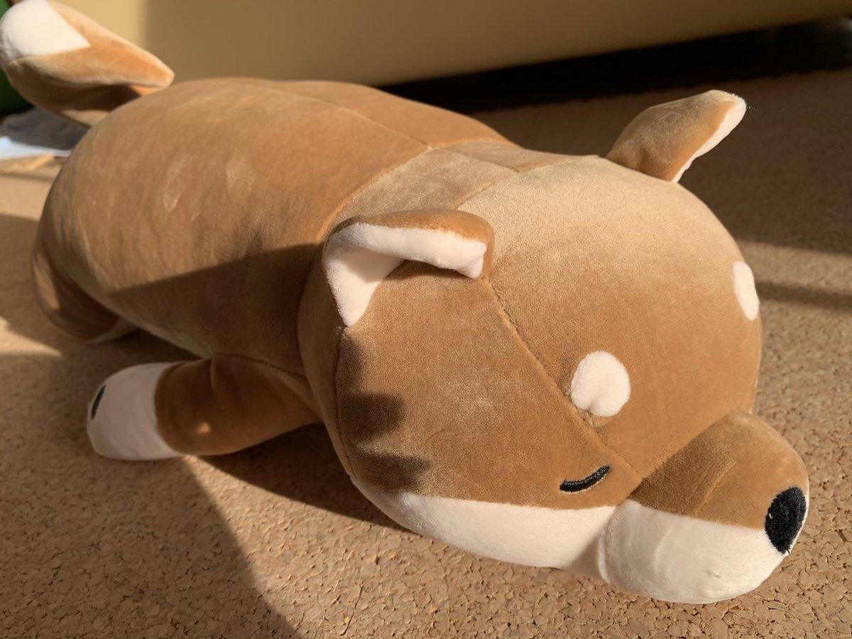 test ツイッターメディア - いぬのきもちさんから柴犬抱き枕が届きました❣️🐶 かわいいぃ~🥰 気持ちいぃ~✨  ちょうどはな🐕を抱っこしているような 懐かしい感覚でほっとします😌  はながいつもいた場所に置いてみました🎵 うん、かわいいぃ🐶😊  #いぬのきもち #ベネッセ #柴犬抱き枕 #柴犬 #柴犬のぬいぐるみ https://t.co/kgK99sLz9d
