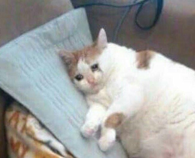 Sad Cat Meme T Shirt Sad Cat Sad Cat Meme Crying Cat Crying Cat