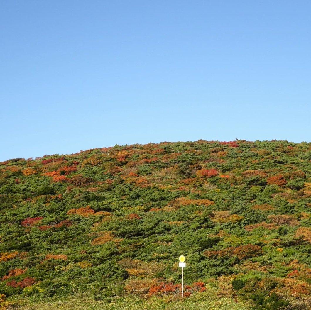 test ツイッターメディア - #JAL の #どこかにマイル で 選ばれた場所は、山形県✈️  蔵王温泉へ行ってきました♨️  紅葉🍁には少し早かったけれど、 美味しいものをたくさん食べて 温泉でのんびりして とても楽しい どこかにマイル旅でした✨  #蔵王 #蔵王温泉 #山形旅行 https://t.co/UBrIuafbDT
