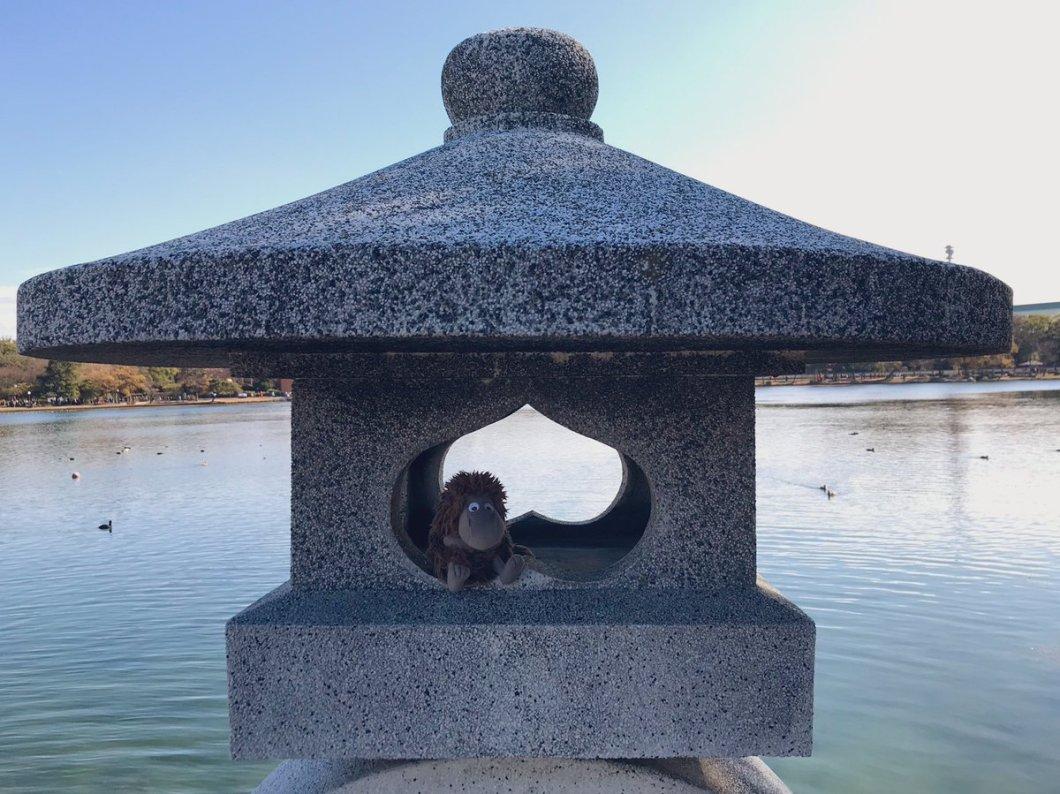 test ツイッターメディア - 大濠公園 池の鯉が大きい 笑 #ご先祖さまと #福岡旅行 https://t.co/BNJfkAz8NB