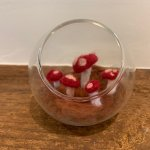 Ali Segel On Twitter I Just Bought Miniature Elf Houses And Snail Figurines To Put In My Needle Felt Mushroom Terrarium Is A Sentence Only A Several Month Quarantine Could Bring Out