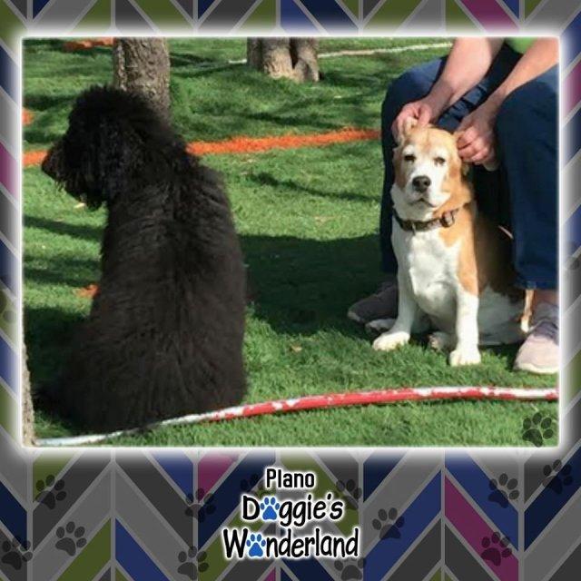 DoggiesWonderTX photo