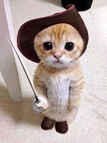 test ツイッターメディア - @z85ia イモトアヤコがきれた猫 https://t.co/sFVQvqPAfq
