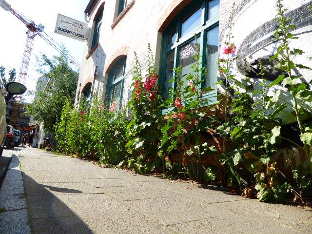 test Twitter Media - Urban Gardening in Ottenser Pflasterfugen https://t.co/FK5rKhlWfC