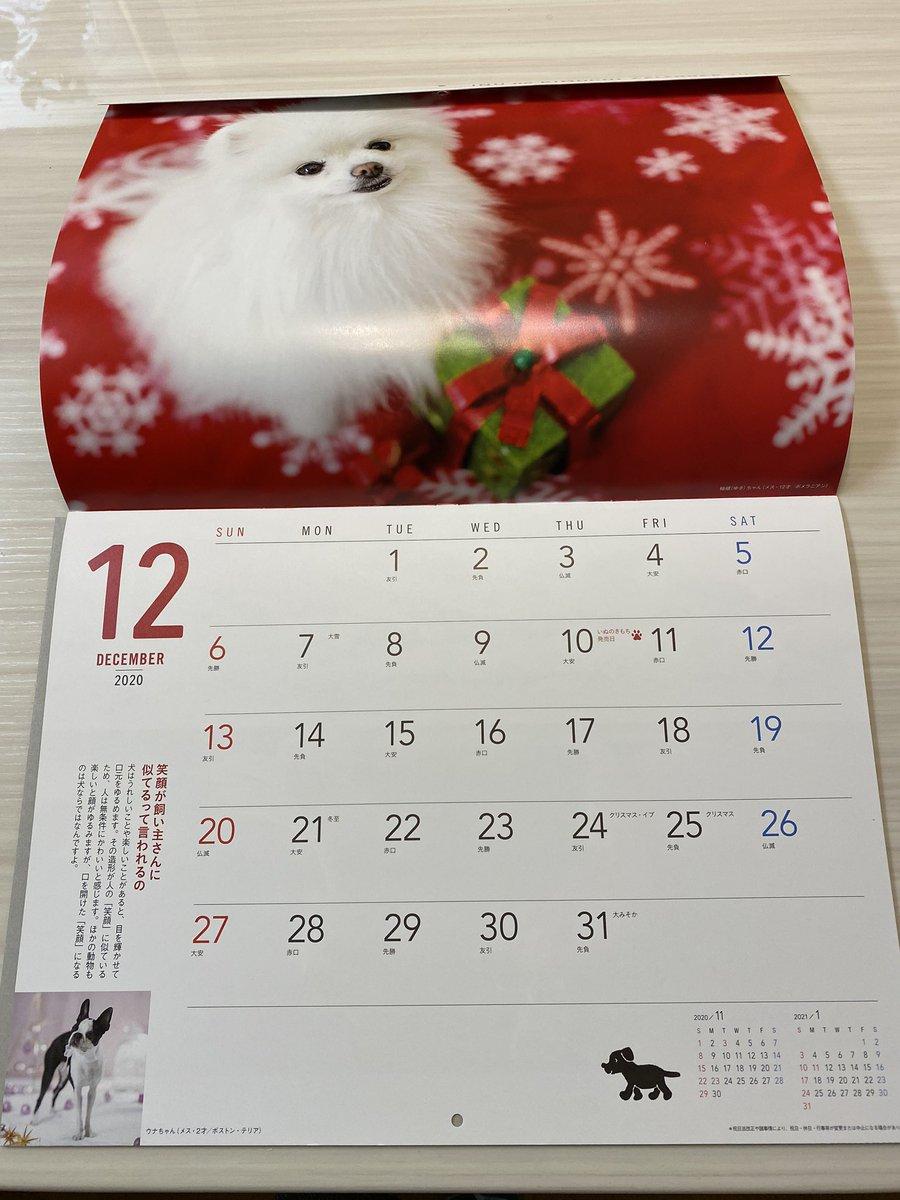 test ツイッターメディア - いぬのきもち SMILE DOGカレンダー2021 が届きました。  わが家は柚嬉が今年2020年12月 モデル掲載していただいていました。 表紙をめくるとドン!っと柚嬉なので 2021年になっても ずっとこのままめくることができないような。。。😅記念の一冊いただきました。  ありがとうございました❣️ https://t.co/dpvwanCYKe