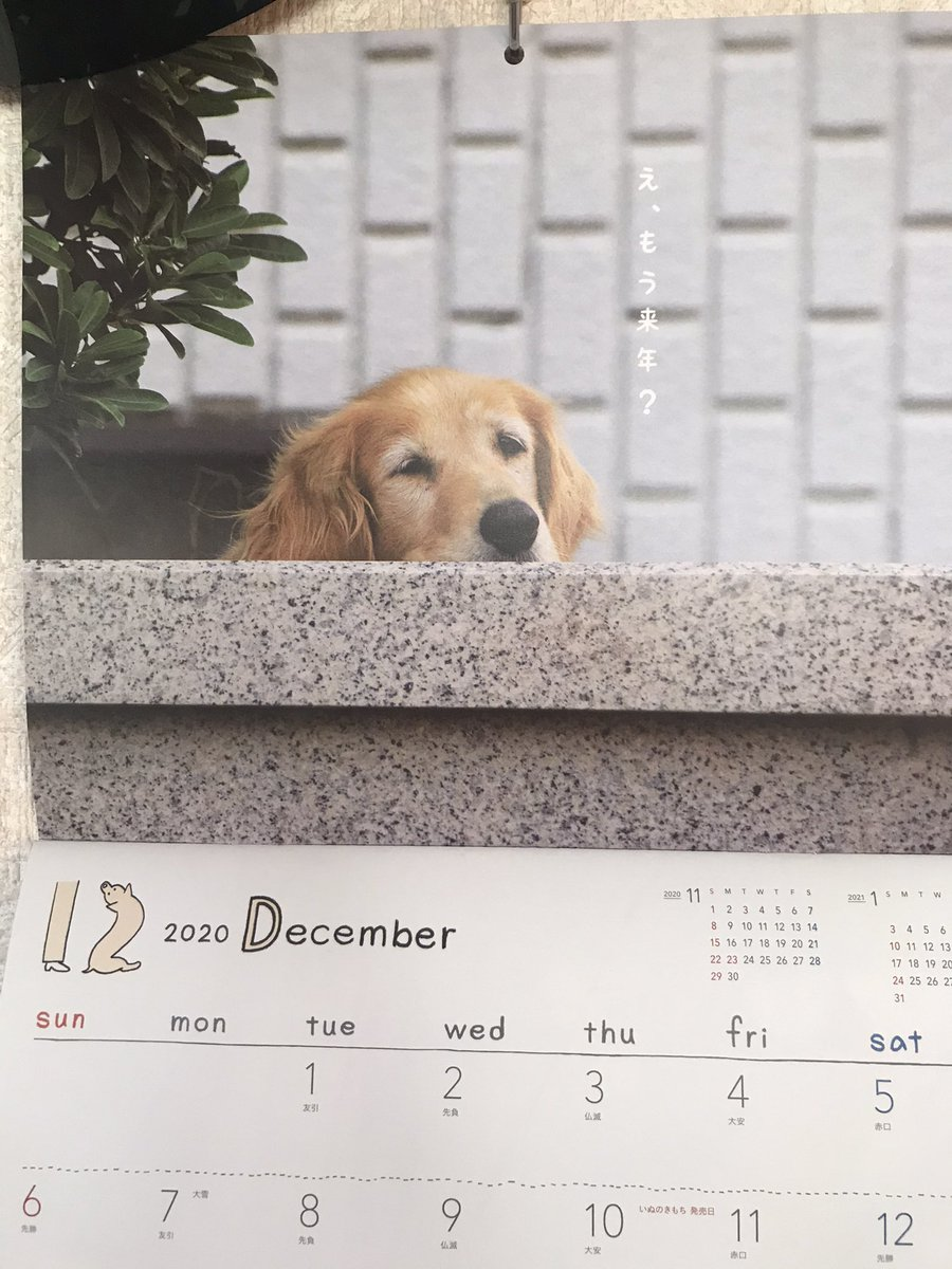 test ツイッターメディア - 「いぬのきもち」1月号付録はカレンダー。 https://t.co/OB6SqlhFvI