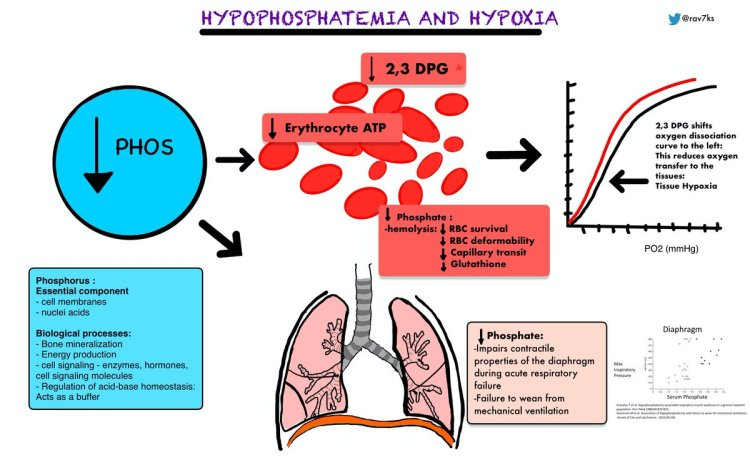 MedTweetorial: #Tweetorial Author: @rav7ks  Type: #MedEd #Physiology Specialty: #IM #InternalMedicine #CriticalCare Topics: #Phosphate #Hypophosphatemia #Hypoxia #RespiratoryFailure