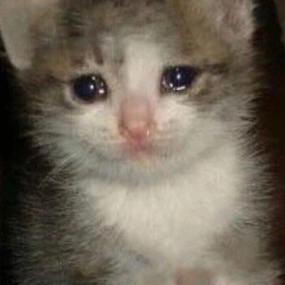 25 Best Crying Cat Memes Meme Memes Kitten Memes Imgur Memes
