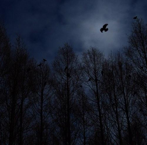「闇」の画像検索結果