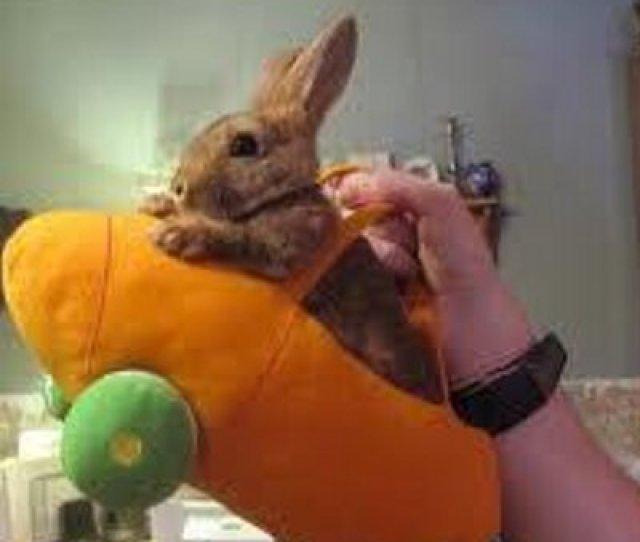 Carrot Lover