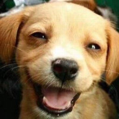 Image of: Baby Cute Animals Twitter Cute Animals planetofanimalz Twitter