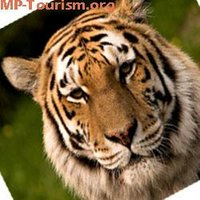 MP Tourism India (@MPTourismIndia )