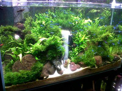 Aquascape Island on Twitter: