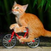 bike (@bike )