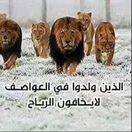 أسد الله الغالب On Twitter االانتحاري تطوع ليكون هو البقرة Http T Co Gkhjgco69b