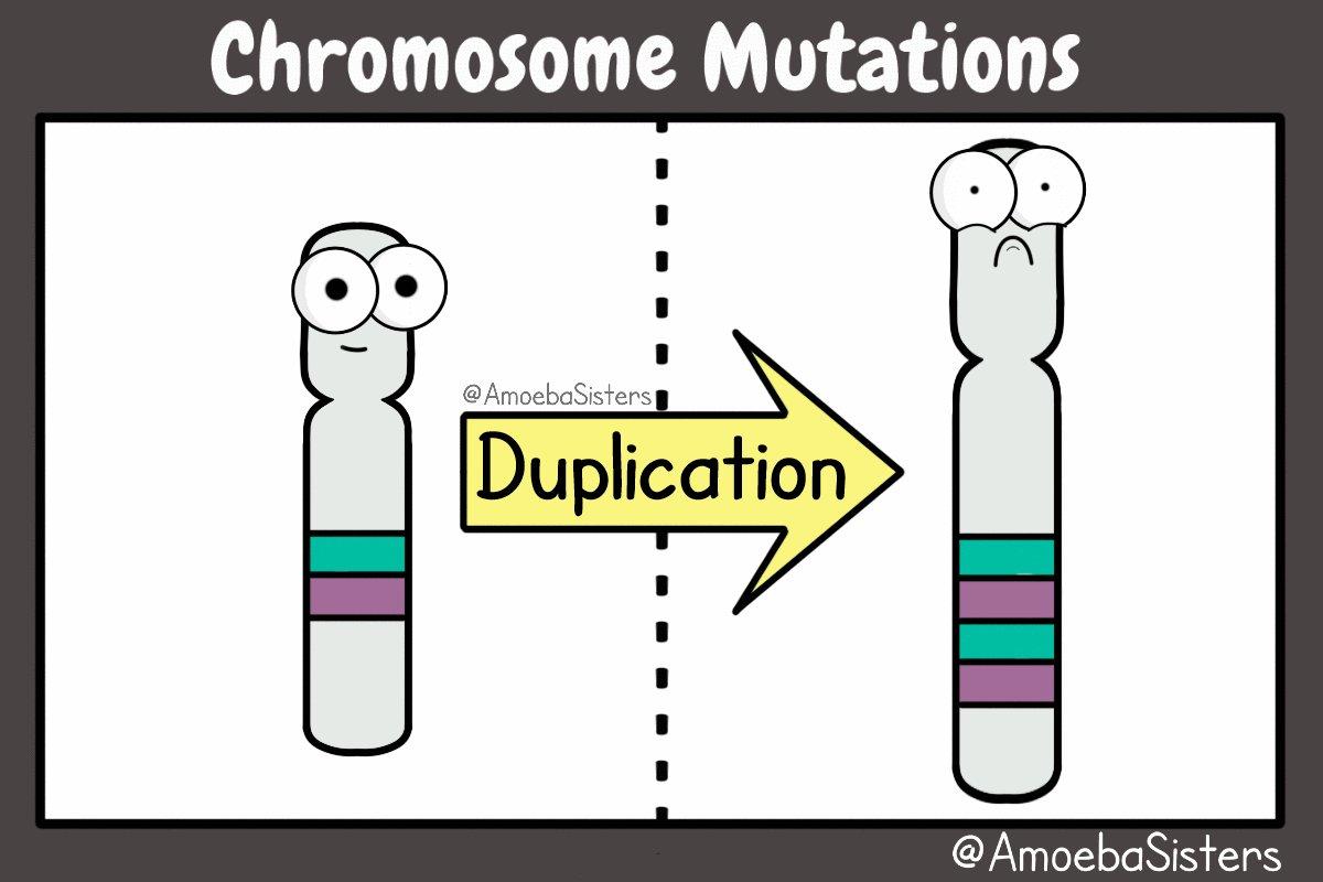 Amoeba Sisters On Twitter Just A Few Chromosome