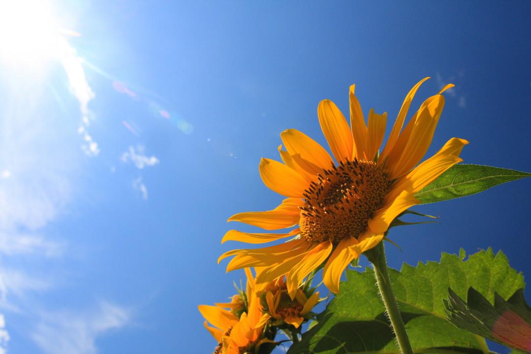 暑い夏の日。