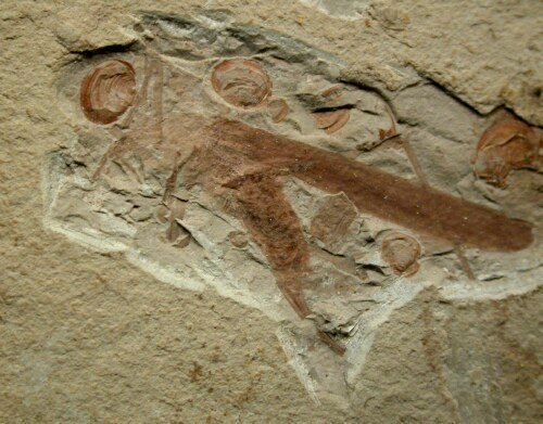 Student finds 120 million year old rare fossil