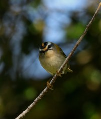 firecrest-old-town-251016