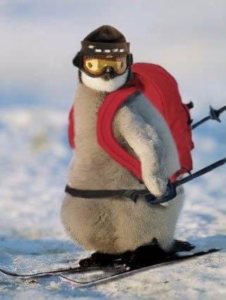 7fc03c48bc950ce16b40ef6c5044d116--funny-penguin-emperor-penguins