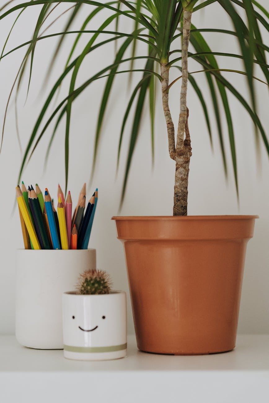 colored pencils near potted plant