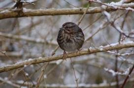 Sparrow no. 2
