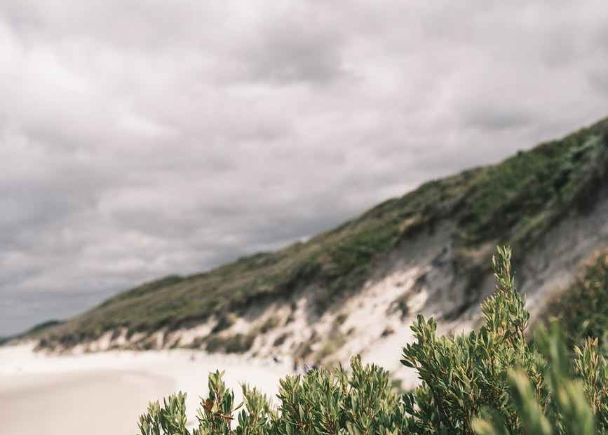 mountain with junipers against sea shore under fluffy clouds