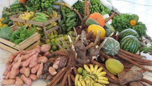 Prefeitura de Itapema abre credenciamento para agricultura familiar