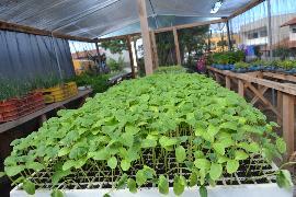Secretaria de Agricultura mantém berçário de vegetais para o projeto Temperar