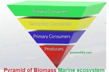 pyramid of Biomass marine eco