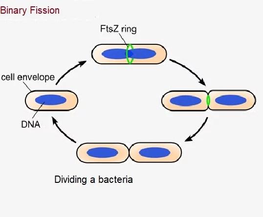 Biological classification-Five Kingdom