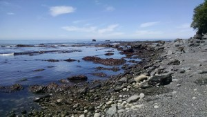 Low Tide Pools