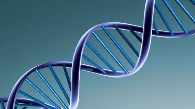 ADN, l'ADN