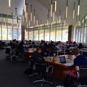 The Sunday before midterms: the Lewis Library Tree House, my favorite study spot, is packed.