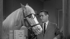 Are Horses Able to Communicate With Humans?