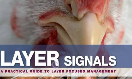 Layer Signals PDF A Practical Guide to Layer Focused Management