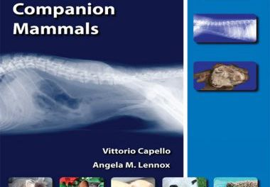 Clinical Radiology of Exotic Companion Mammals 1st Edition
