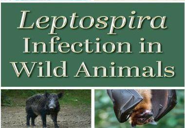 Leptospira Infection in Wild Animals 1st Edition