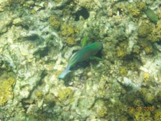 A nice fish in the shark bay