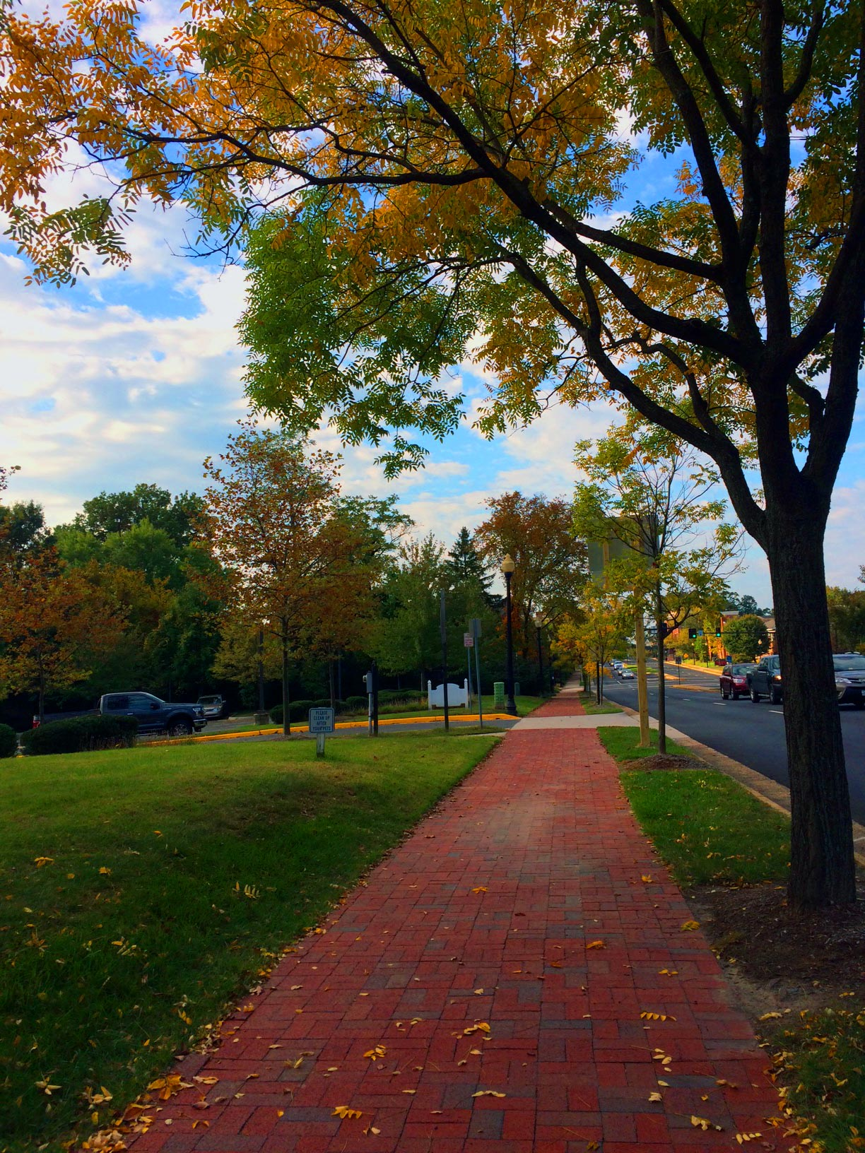 Fall Beauty!